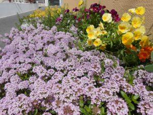 庭造 植栽 ハーブ・タイム