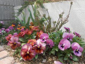 2018春花壇1